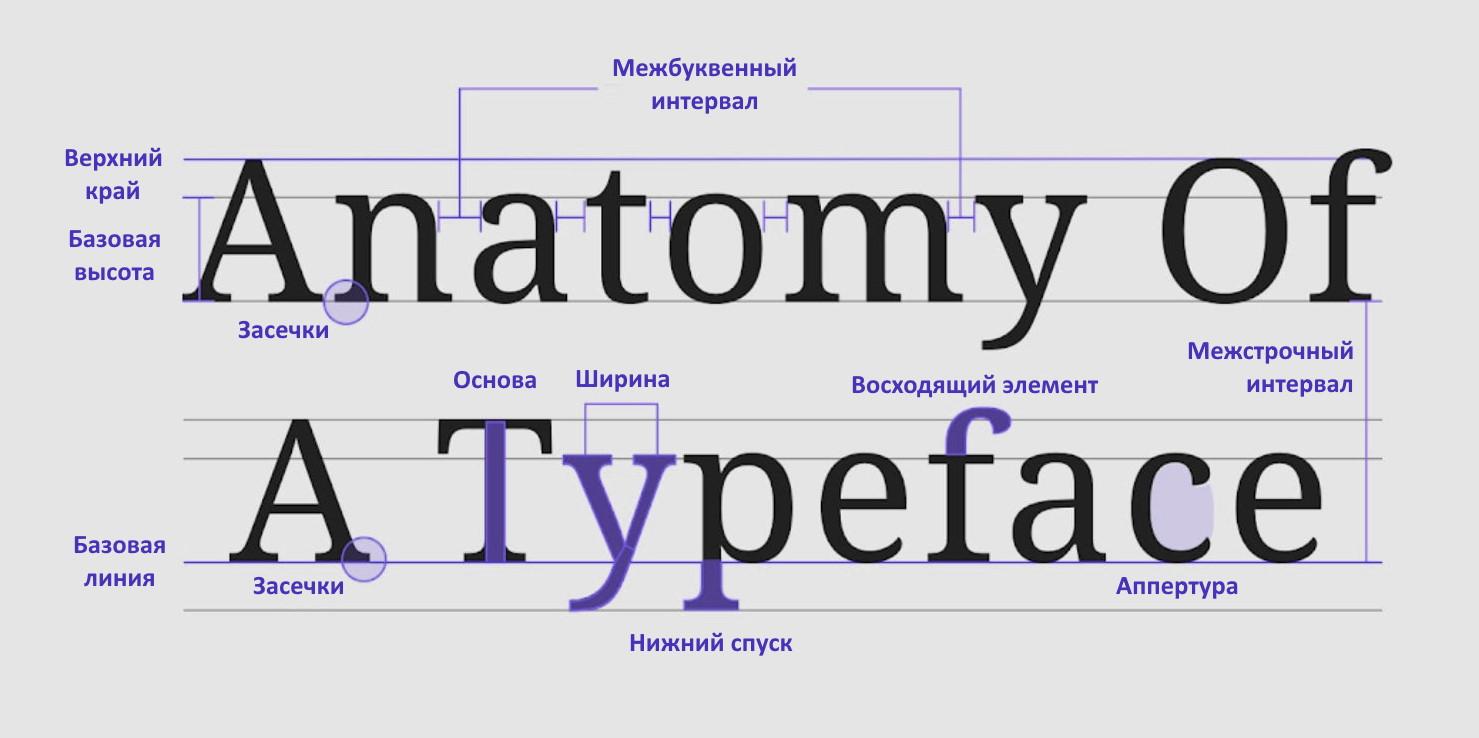 Анатомия шрифта